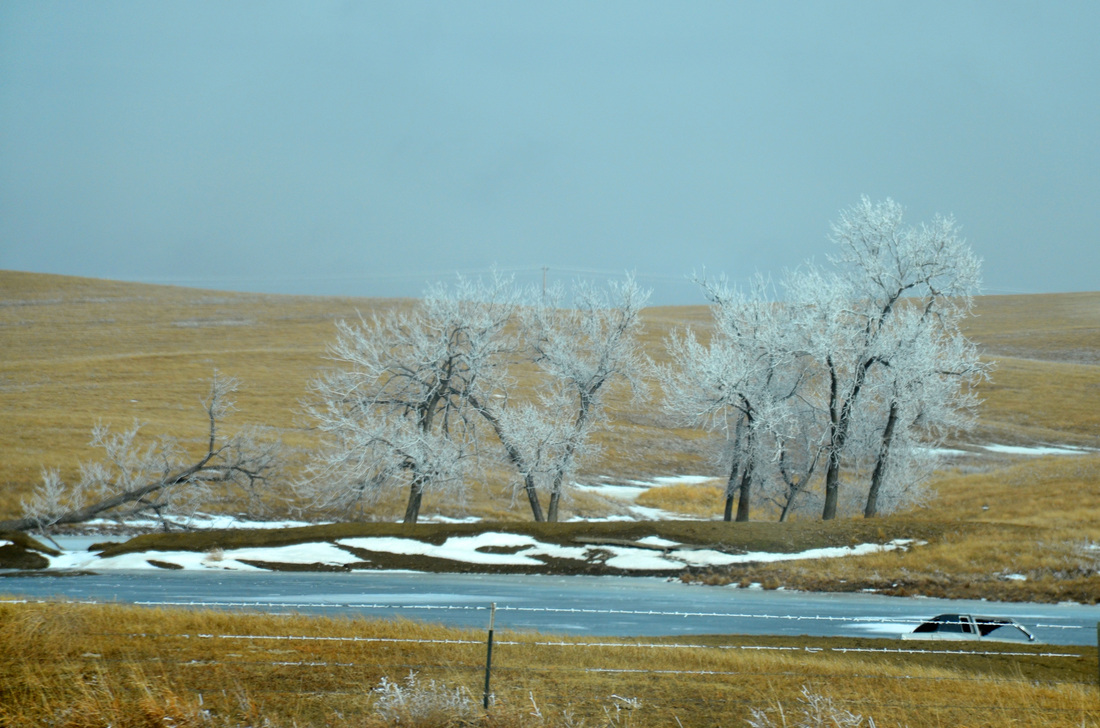 South Dakota's frozen trees.