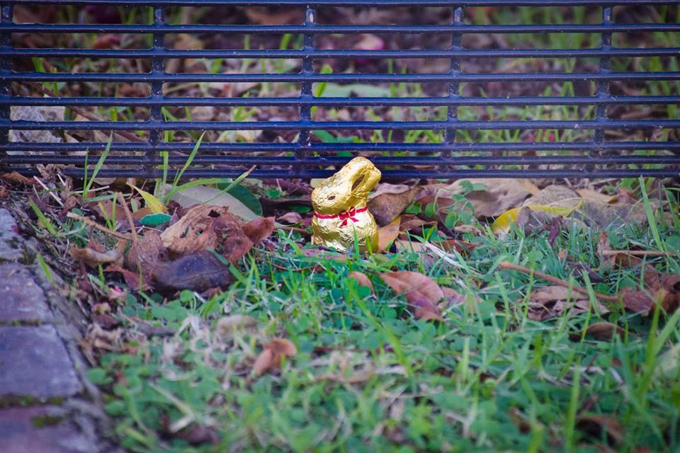 Bunny hunting